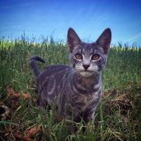 photo wallpaper - cat